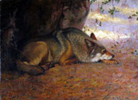 deces-ernest-thompson-seton/seton-sleepingwolf6710-jpg.jpeg