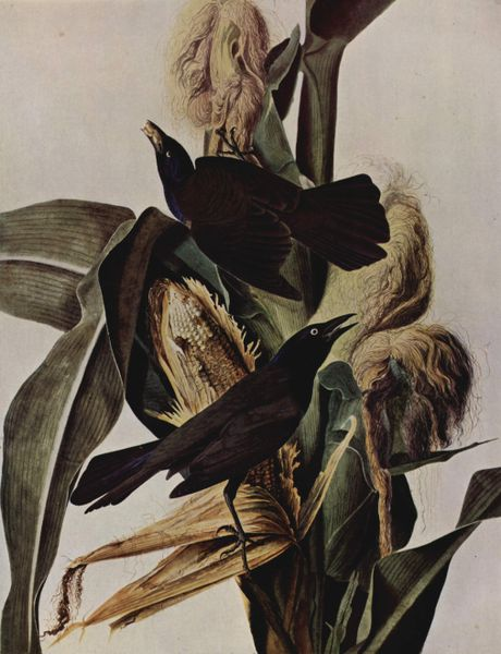 deces-john-james-audubon/460px-john-james-audubon-001a26.jpg