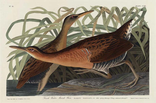 deces-john-james-audubon/at0114b--jpg.jpeg