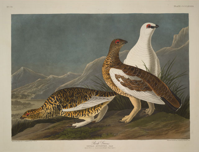 deces-john-james-audubon/vc114a-9-jpg.jpeg