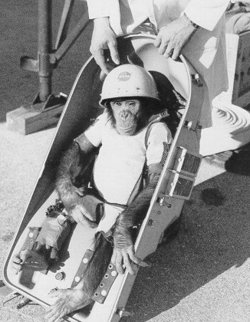 ham-le-chimpanze-voyage-dans-lespace/ham-the-chimp25.jpg